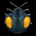 Coleoptera icon