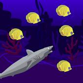 Shark Wild Life