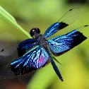 Jewel Flutterer