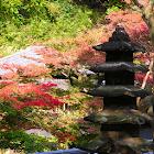 Autumn leaves of Kamakura icon