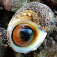 Philippine Sea Creatures