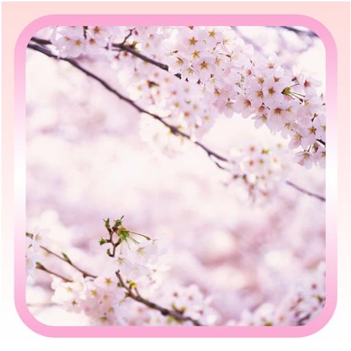 春天繽紛櫻花壁紙 LOGO-APP點子