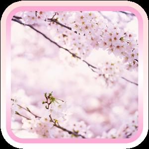 春天繽紛櫻花壁紙 個人化 App LOGO-APP試玩