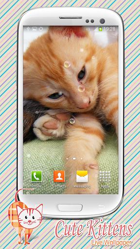 可愛的小貓 動態壁紙