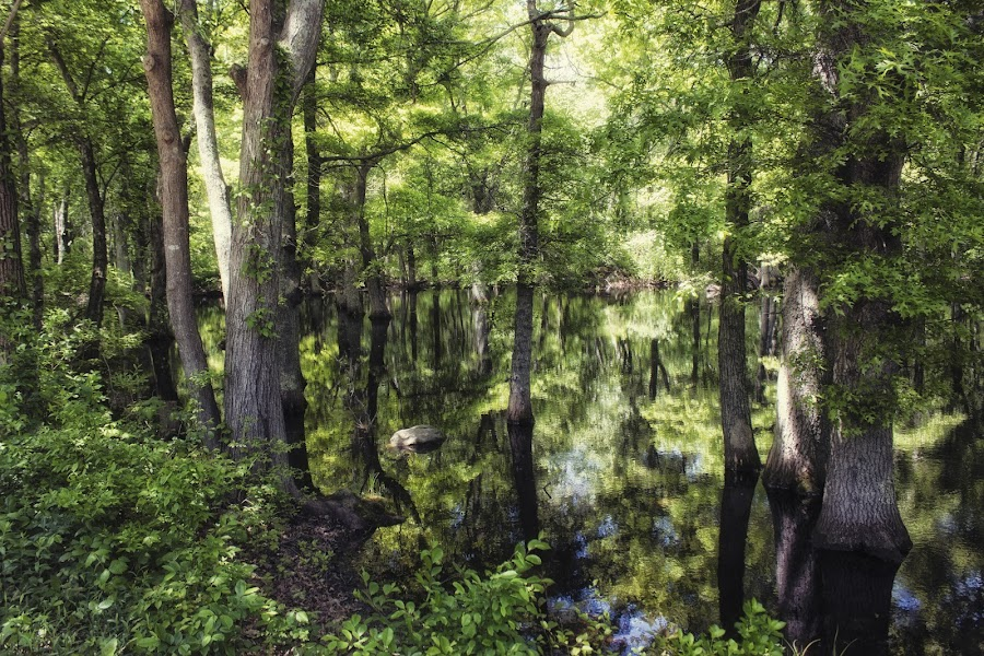 She is missing by Erika Lorde - Nature Up Close Trees & Bushes ( reflection, magical, trees, summer, pond )
