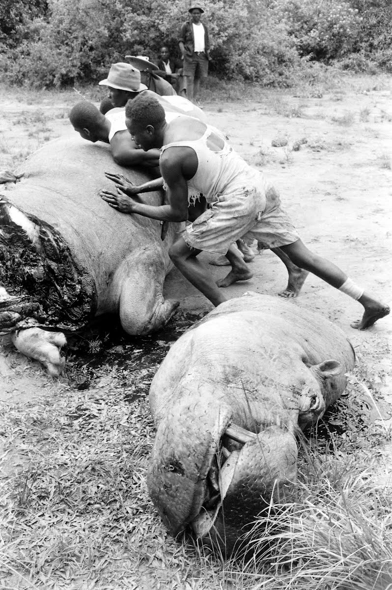 Africa Game Hunting