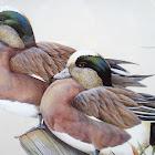 Karen Wigeon Duck