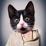 Meow: Cat Animal Face