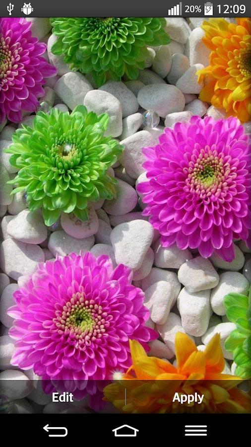 flowers live wallpaper 9apps