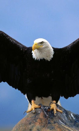 Eagle Live Wallpaper 13 Screenshot 1395103