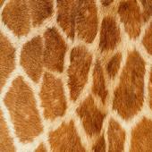 Giraffe Keyboard Skin