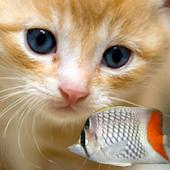 KITTY & FISH LIVE WALLPAPER(3)
