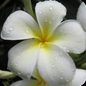 Kauai Flowers