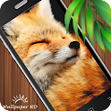 Fox Wallpaper HD icon