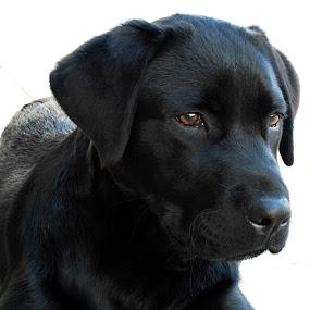 skipe by Ruy Lopes - Animals - Dogs Puppies ( skipe deitado olhar,  )