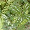 Aluminun plant