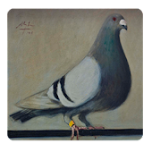 Guide Pouter Pigeons