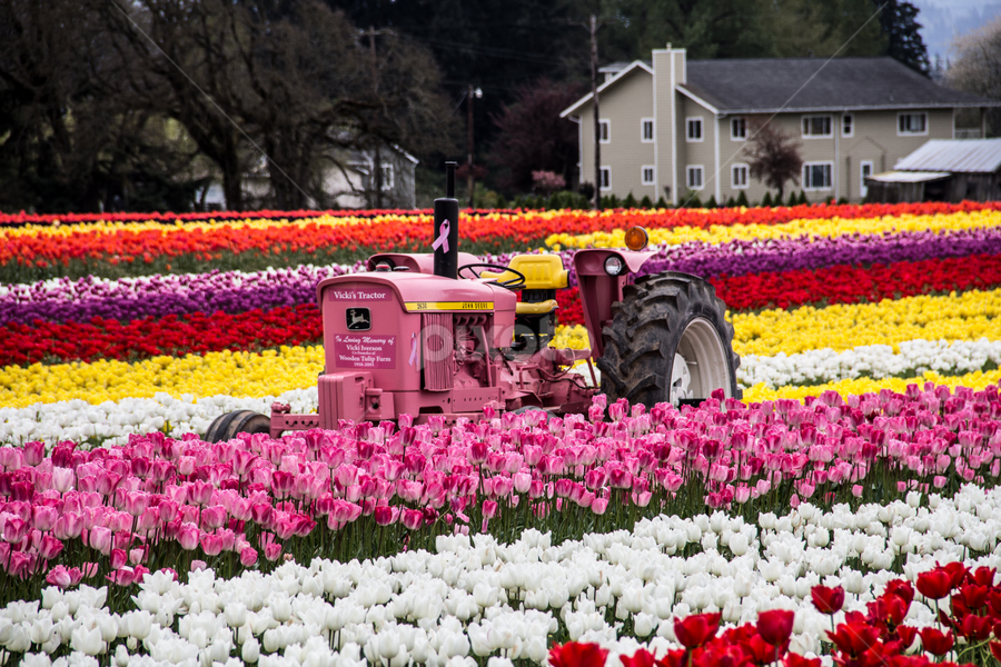 by Don Saddler - Flowers Flower Gardens ( farm, pink, tulips, tractor, cancer, color, colors, landscape, portrait, object, filter forge,  )