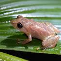 Dink Frog