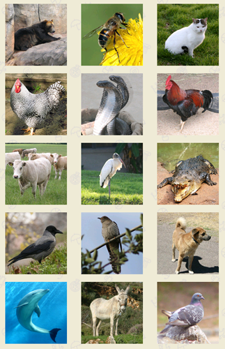 Sounds Of Animals Free