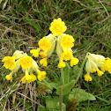 Yellow flower?!