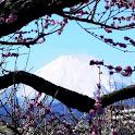 神奈川県 曽我梅林(JP050) icon