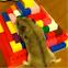 Chinese Dwarf Hamster