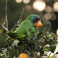 Wildlife of Dominica