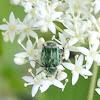 Emerald Flower Scarab