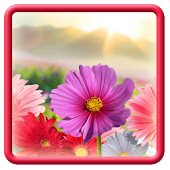 Flowers HD Theme