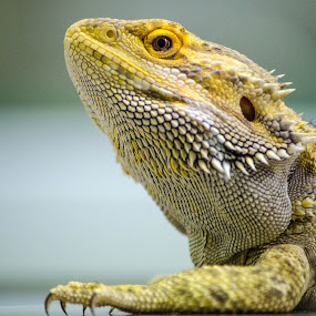ARIS by Ciupe Simona - Animals Reptiles