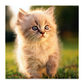 3D smallcat HD Live Wallpaper