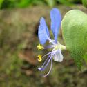 Kanpet, Day flower