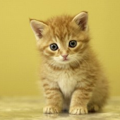 Cute Animal Wallpaper 1