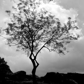 Fan Dancer by Rich Eginton - Black & White Landscapes ( clouds, b&w, tree, silhouette, storm,  )