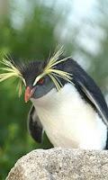 Screenshot of PenguinsWorld wallpaper01