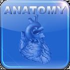 Human Anatomy II icon
