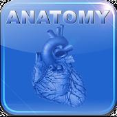 Human Anatomy II