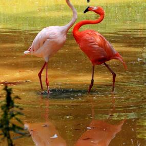 by Niney Azman - Animals Birds ( ulu yam n  zoo negara )