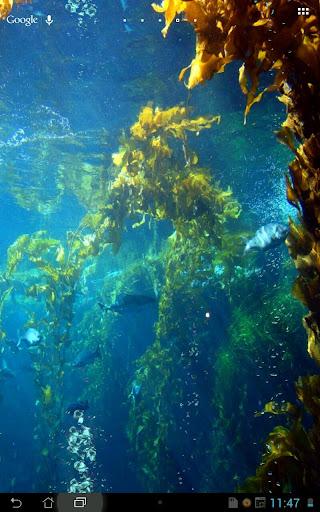 Under Water Scene Day Dream