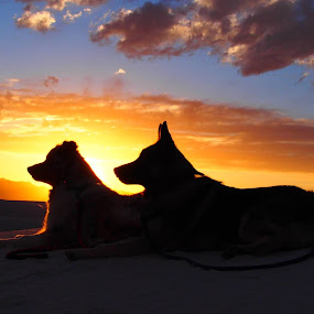The boys at sunset by Molly Doerner - Animals - Dogs Portraits ( #showusyourpets, #garyfongpets,  )