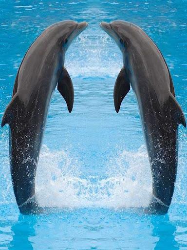 玩免費休閒APP|下載海洋里的精灵:海豚 app不用錢|硬是要APP