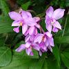 purple ground orchid