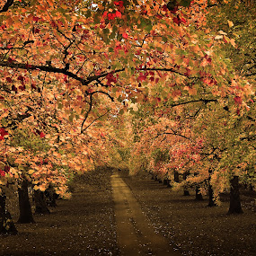 Fall in the Lane by Todd Klingler - Nature Up Close Trees & Bushes ( orange, fall colors, red leaves, orange leaves, dirt road, road, yellow, leaf, landscape, leaves, fall leaves on ground, fall leaves, red, nature, tree, autumn, fall, path, yellow leaves, dirt,  )
