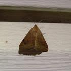 Vetch Looper Moth - Hodges#8733