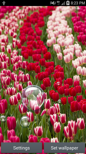 Tulip Collections