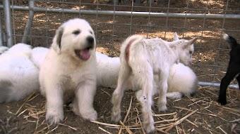 Fuzzy Puppy Stars