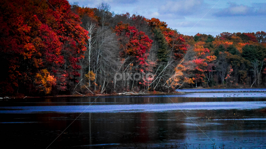 by Sue Duq - Landscapes Weather ( fall, trees, forest )