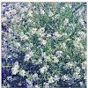 White rock flower...?