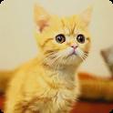 【無料育成】ポケット哺乳類(ネコ)~アメショー~ icon